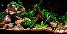 El acuario y sus accesorios 1