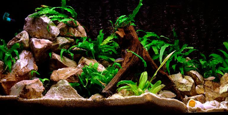 El-acuario-y-sus-accesorios-1