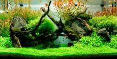 El acuario y sus accesorios 2