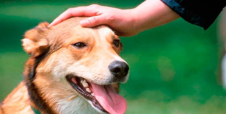 acariciar-a-tu-perro