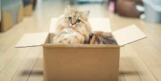 Adaptación del gato a un nuevo entorno