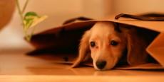 Cosas a considerar antes de adquirir una mascota