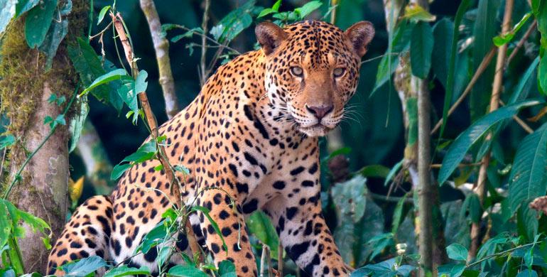 Albergue Zoológico el Jaguar