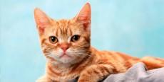 Ansiedad generalizada en un gato