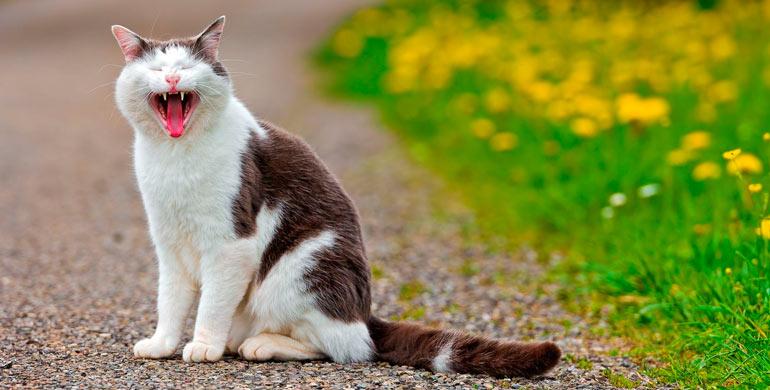 boca-del-gato-caracteristicas