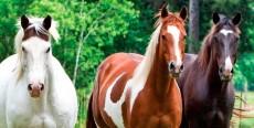 ¿Caballo en el campo o caballo estabulado? Acondicionamiento de la cuadra