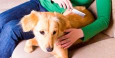 Cómo cepillar a tu perro