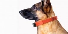 El Smartphone para perros tiene forma de collar
