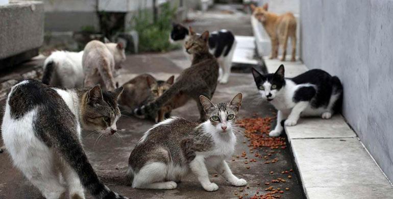 colonias-felinas