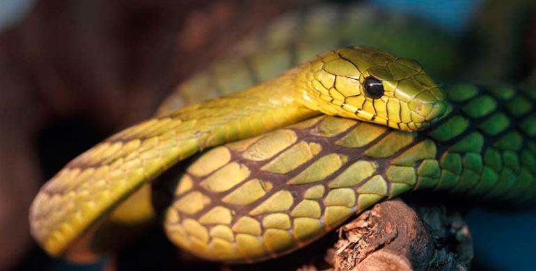 como-observar-anfibios-y-reptiles