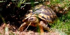 Cuidados básicos de las tortugas de tierra