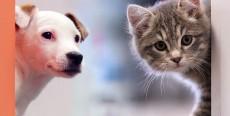Diez curiosidades sobre tu mascota que quizá no sabías