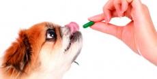 Cómo darle una pastilla a un perro