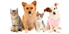 Desparasitación en perros y gatos