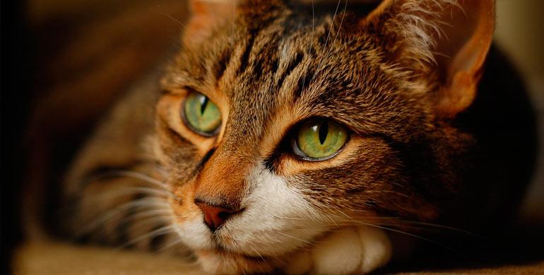 diseno-felino