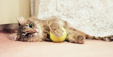 Cómo educar gatos fácilmente