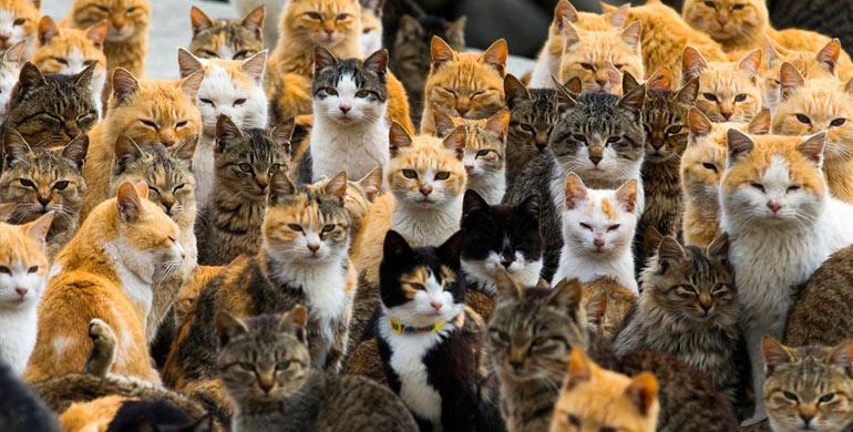elegir-un-gato