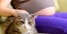 Me he quedado embarazada, ¿Tengo que deshacerme del gato?