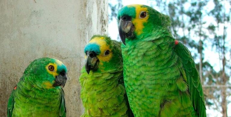enfermedades-de-aves