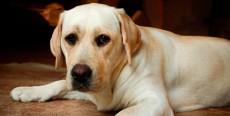 5 enfermedades comunes en perros que pueden ser causadas por una alimentación inadecuada