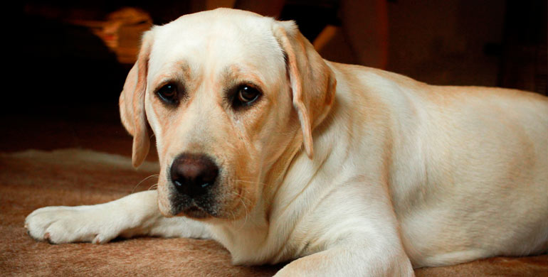 enfermedades-de-perros-por-alimentos