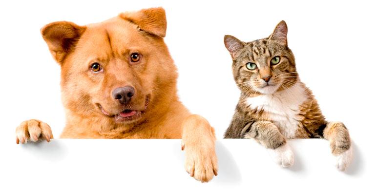 fotografiar-mascotas