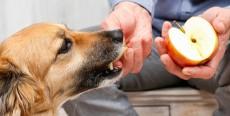 ¿Qué frutas puede comer tu perro?