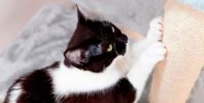 Gatos arañan muebles y paredes