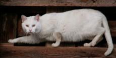 ¿Por qué mi gato se escapa?