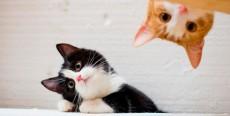 Tu gato te habla. Entiende lo que dice