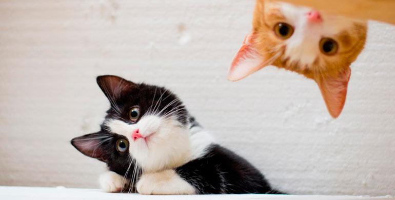 gato-hablador