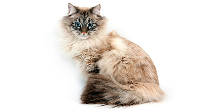 gato-neva-masquerade
