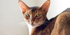 ¿Qué le pasa al gato?… O mejor, ¿Qué te pasa a ti?