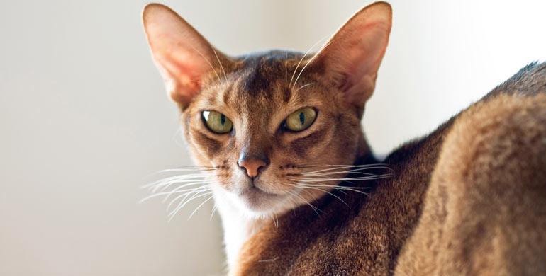 gato-y-persona