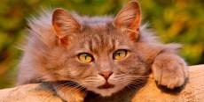 Gatos que se comen la ropa o plásticos… ¡No es normal!