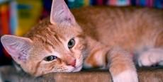 Gatos con incontinencia