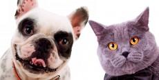 El golpe de calor en perros y gatos