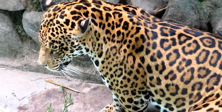 Mini zoológico Granja 21, Cieneguilla