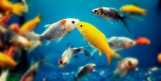 Guía de peces de acuario