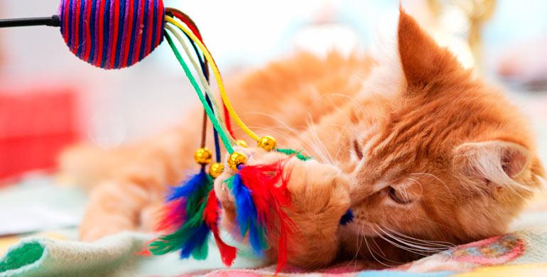 juegos-con-el-gato