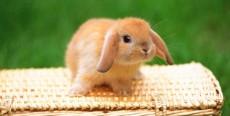 Juguetes caseros para tu conejo