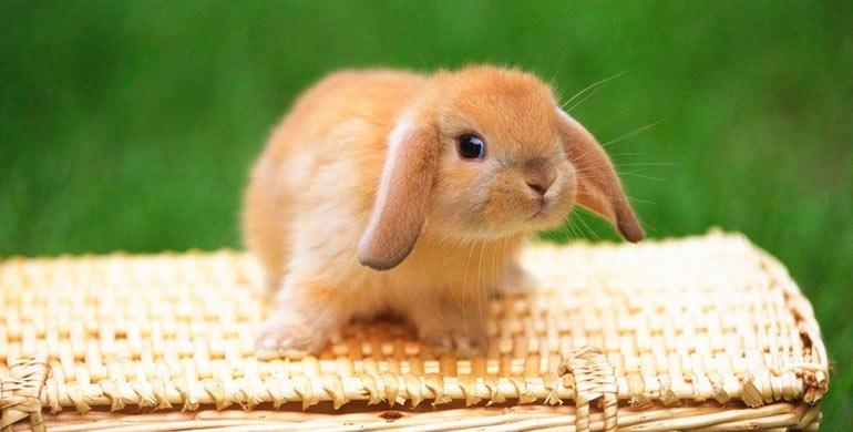 juguetes-para-conejo