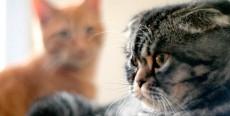 La llegada de un segundo gato en casa