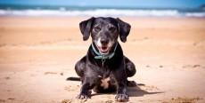 Seis cosas que debes hacer cuando llevas a tu perro a la playa