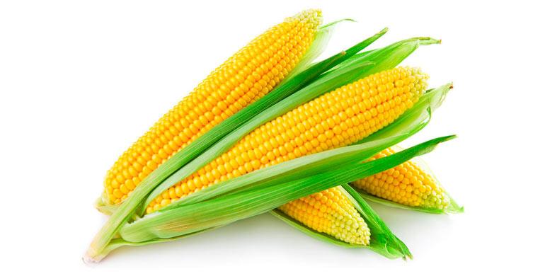 maiz-dulce