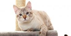 El marcaje en los gatos
