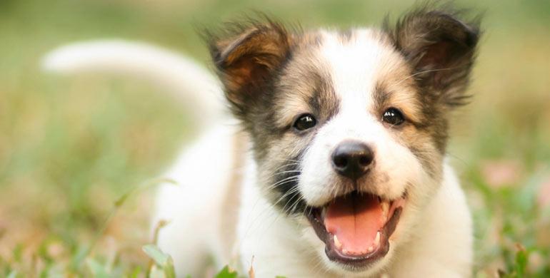 mascota-feliz