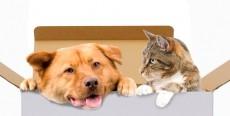 Animales en comunidades de vecinos