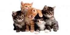 Nombres para gatos hembras