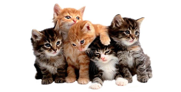 nombres-para-gatos-hembras